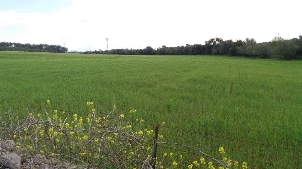 Campos de cultivo en la ruta Costitx-Sencelles-Alrededores 2