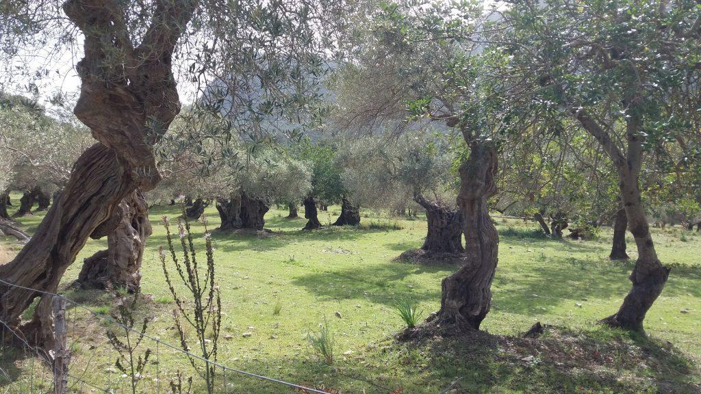 Pollença-Casas de l'Assarell y regreso