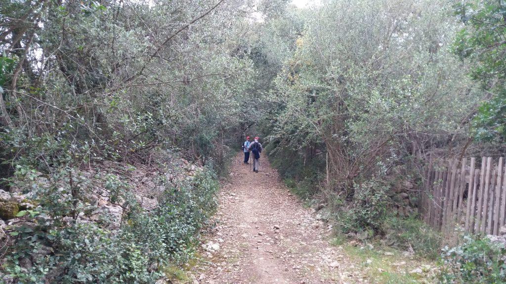Camí d'es Revellar en la ruta Biniali y caminos de los alrededores