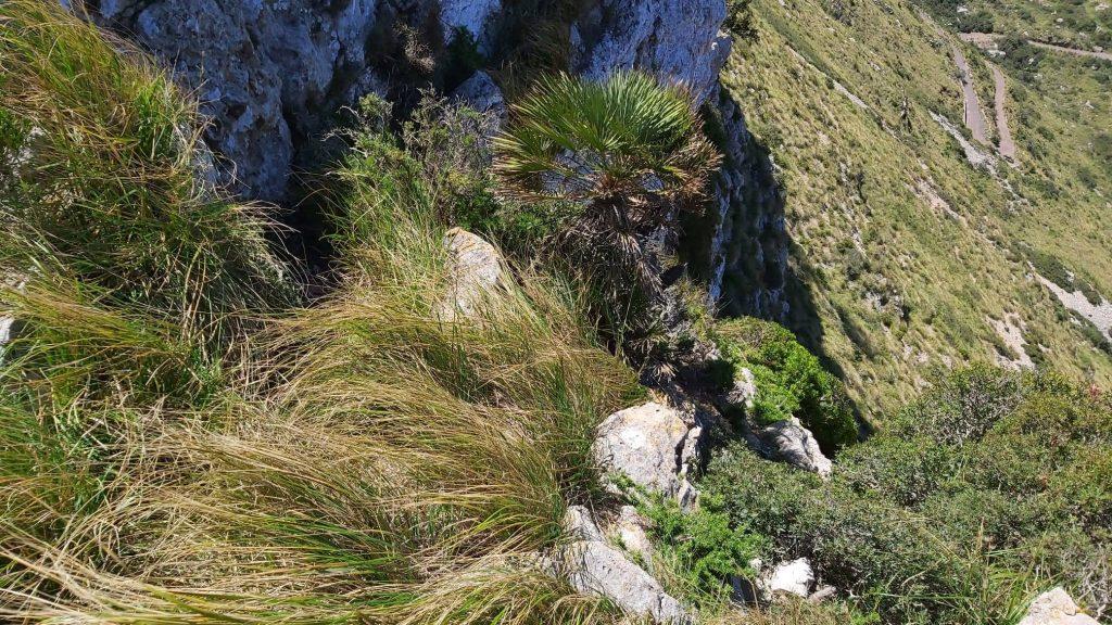 Puig de Cornavaques desde Cala Sant-Vicenç