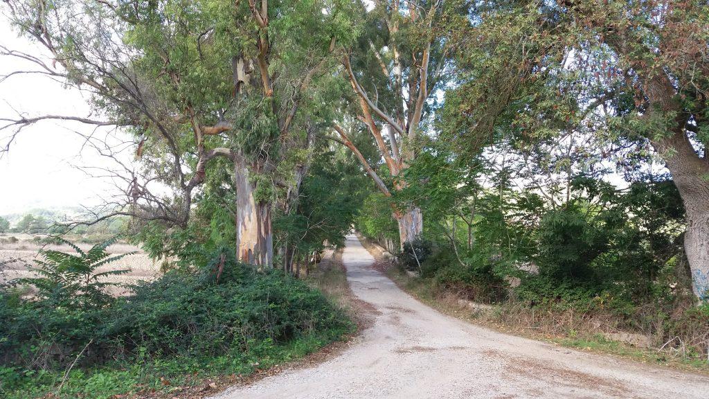Bosque de Bunyoli desde Establiments