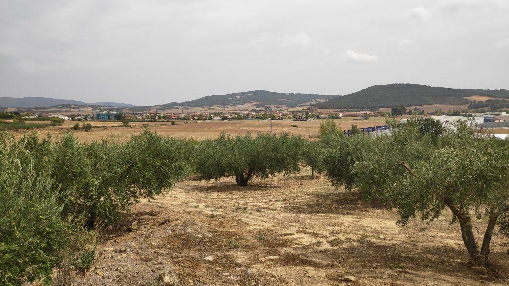 Camino de Santiago-Etapa 5: PuentelaReina-Estella